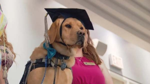 Rugby graduates from Dogs with Wings